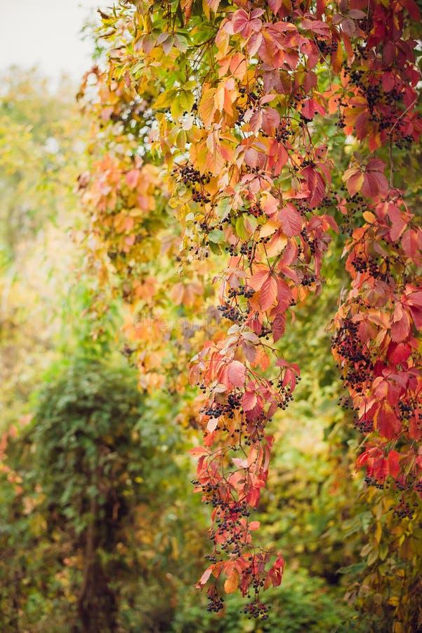 Alberi colorati del paesaggio di autunno bei sopra il fiume, emettente luce al sole fondo pittoresco meraviglioso Colore in natur immagini stock libere da diritti