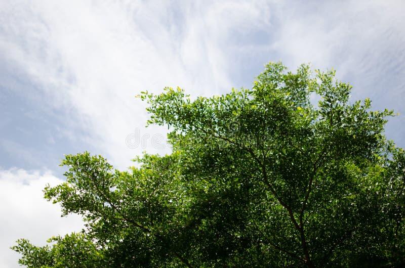 Alberi con il cielo fotografie stock libere da diritti