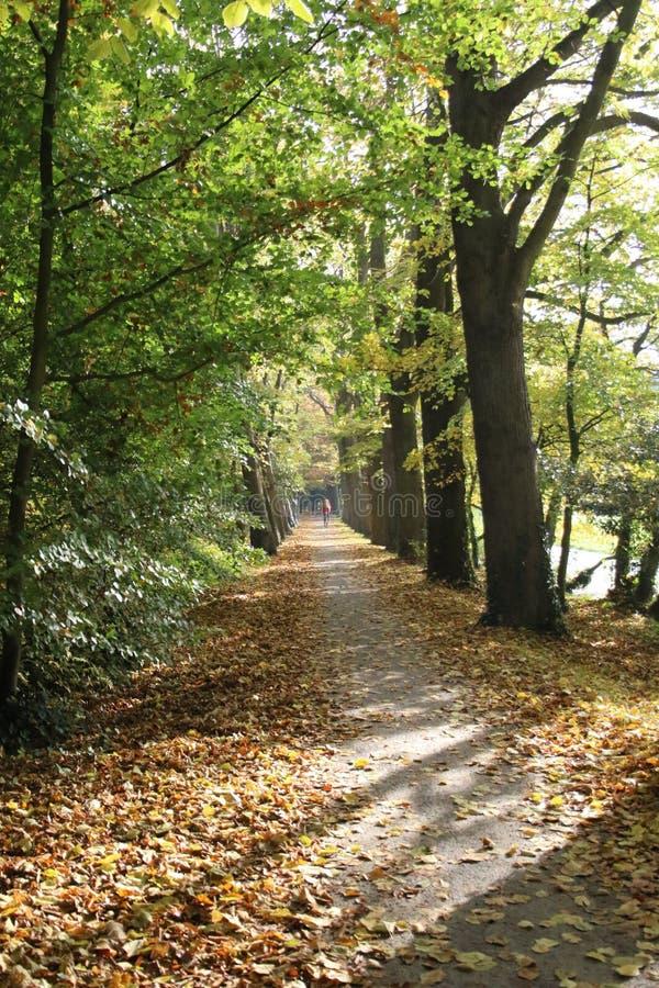 Alberi con l'autunno fotografia stock