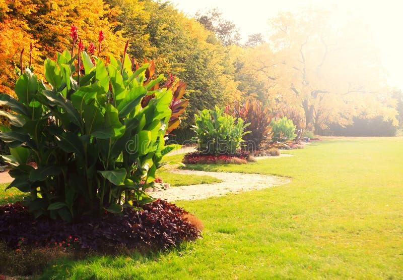 Alberi con le foglie gialle nel parco di autunno immagine stock libera da diritti