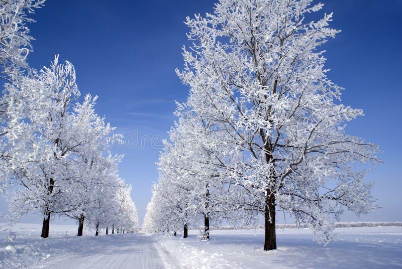 Alberi congelati fotografie stock