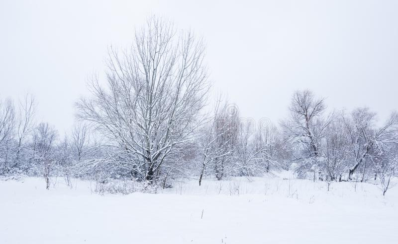 Alberi congelati nel parco o nella foresta con la brina del ghiaccio e della neve il giorno di inverno nebbioso freddo nel tramon fotografia stock