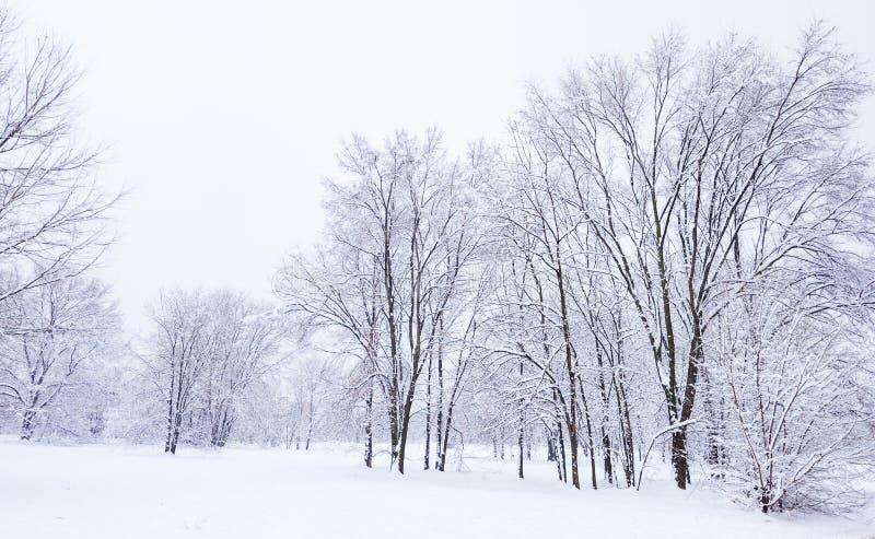 Alberi congelati nel parco o nella foresta con la brina del ghiaccio e della neve il giorno di inverno nebbioso freddo nel tramon fotografia stock libera da diritti