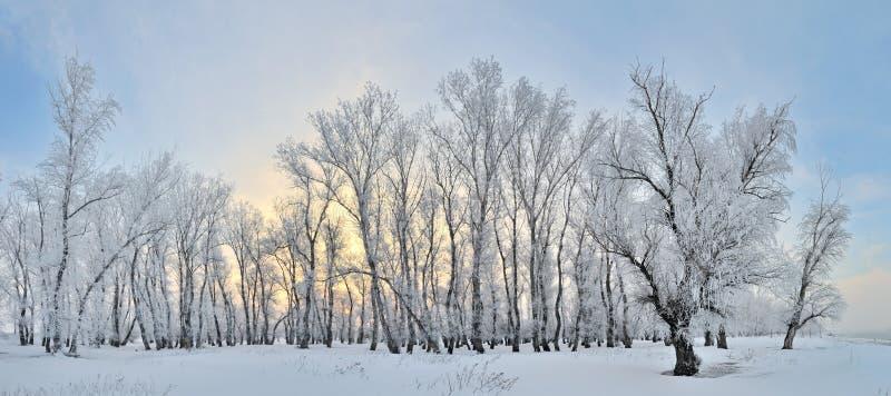 Alberi congelati sull'inverno fotografia stock