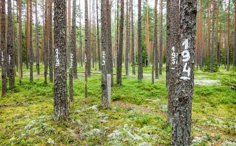 Alberi contrassegnati per monitoraggio ambientale fotografia stock libera da diritti
