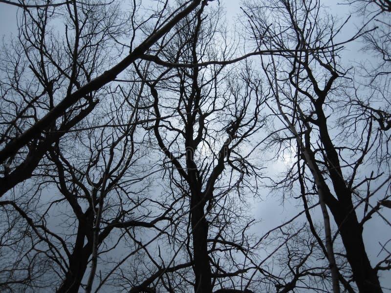 Alberi contro il cielo immagini stock libere da diritti