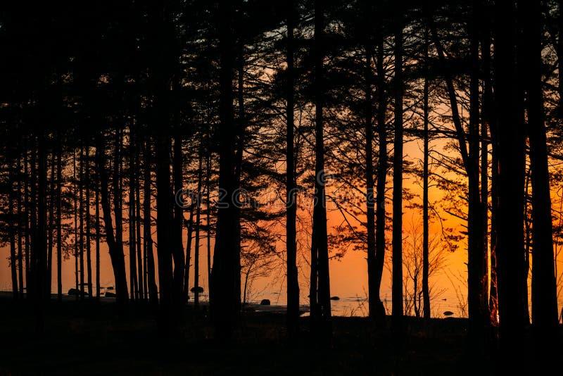 Alberi contro il golfo di Finlandia alla sera immagini stock libere da diritti