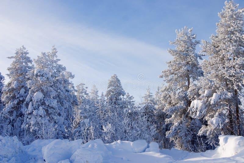 Alberi coperti da una neve fotografie stock libere da diritti