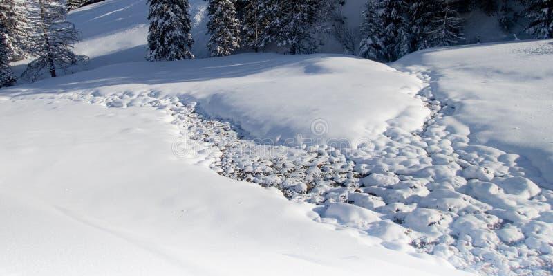 Alberi coperti in neve bianca subito dopo precipitazioni nevose sulle alpi svizzere - 6 fotografia stock libera da diritti