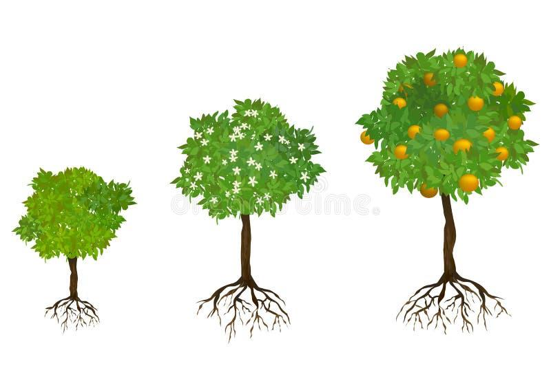 Alberi crescenti con le radici illustrazione vettoriale