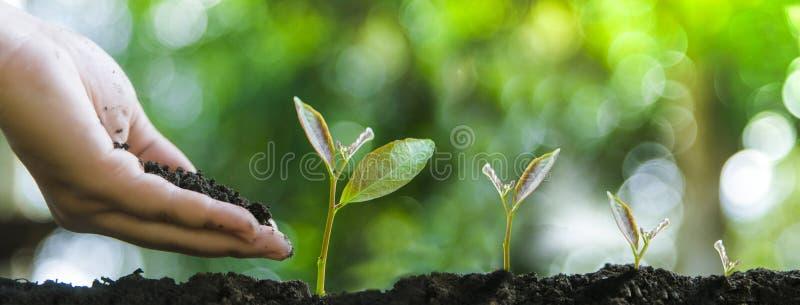 Alberi crescenti per manutenzione di crescita e degli alberi o della natura di protezione dell'ambiente fotografie stock libere da diritti