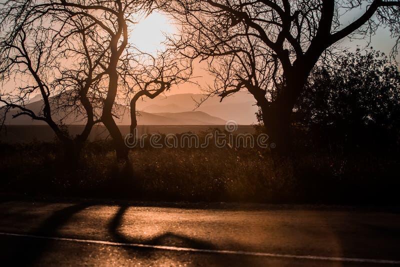 Alberi curvati vicino ad una strada contro fondo montagnoso fotografie stock