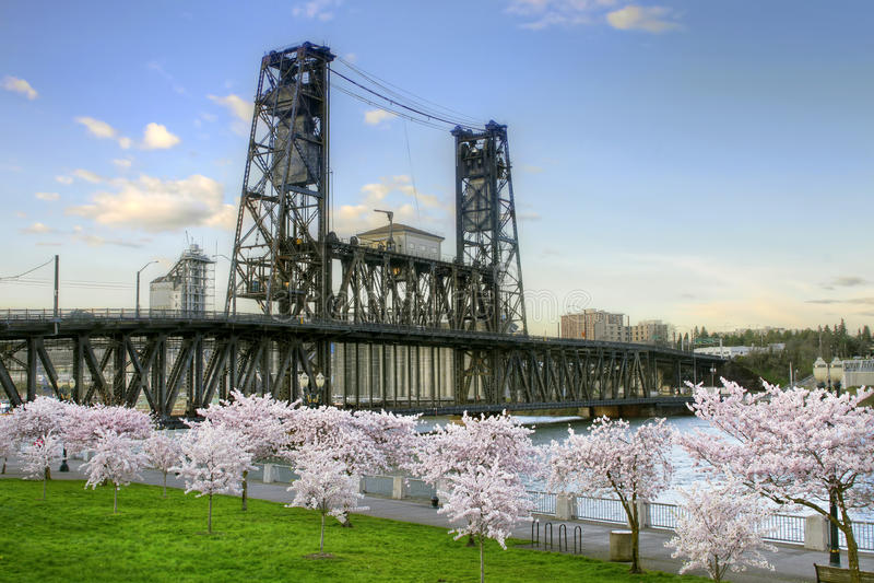 Alberi d'acciaio Portland Oregon del fiore di ciliegia del ponticello fotografia stock libera da diritti