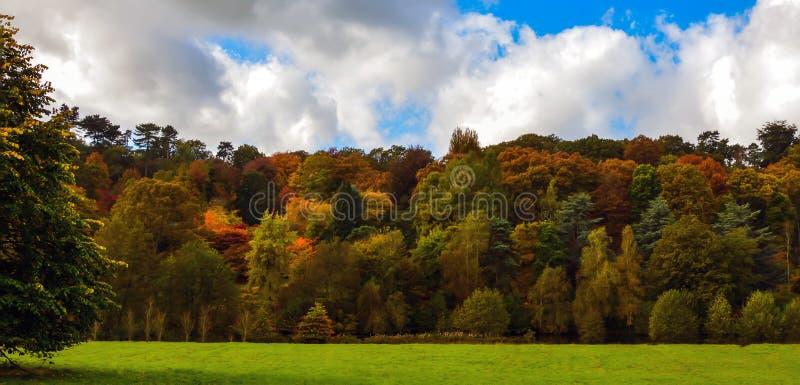 Alberi d'autunno immagine stock libera da diritti