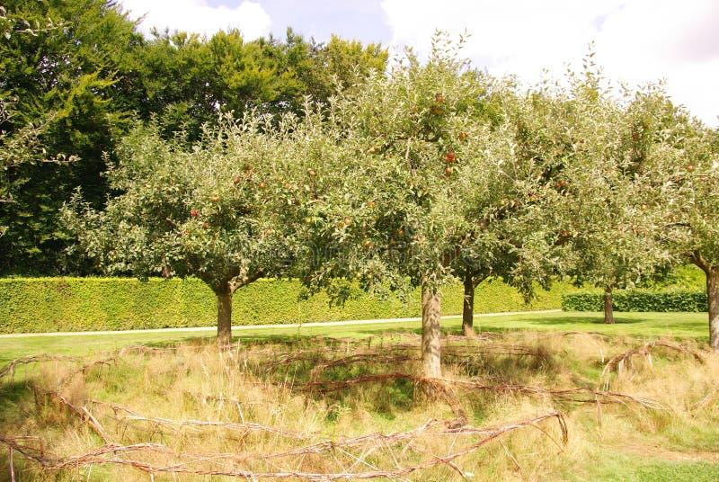 Alberi da frutto immagine stock immagine di filiale for Alberi da frutto prezzi