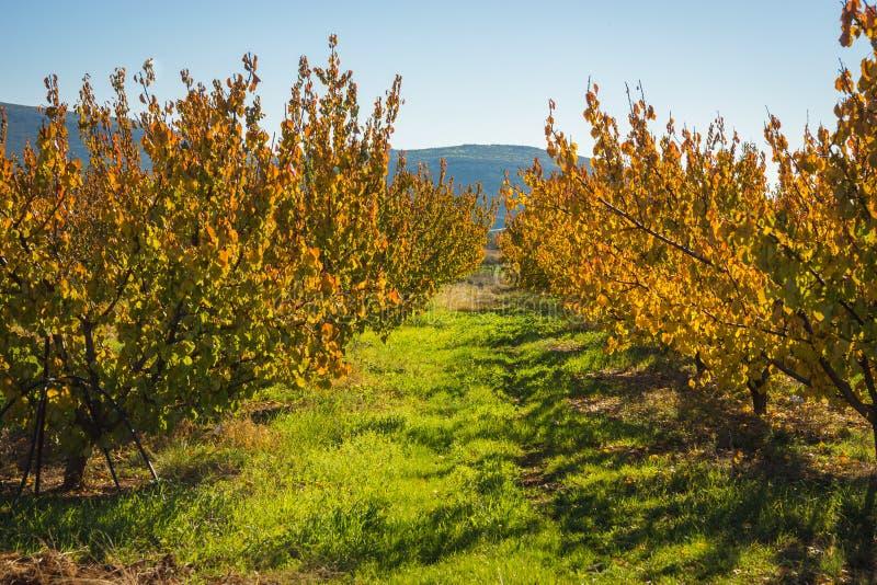 Alberi da frutto in autunno su un pendio di collina nel for Alberi da frutto prezzi