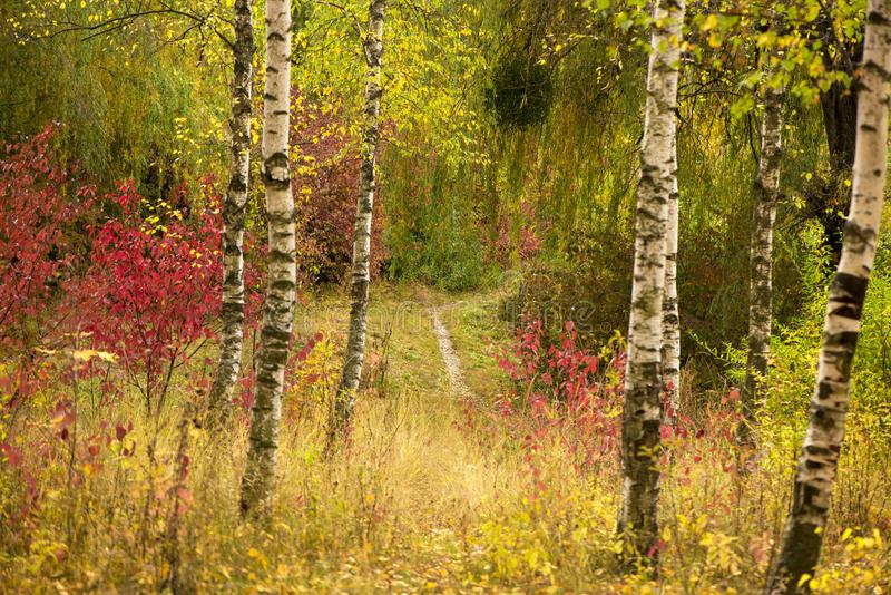 alberi dei fogli di autunno Parco di autunno fotografia stock libera da diritti