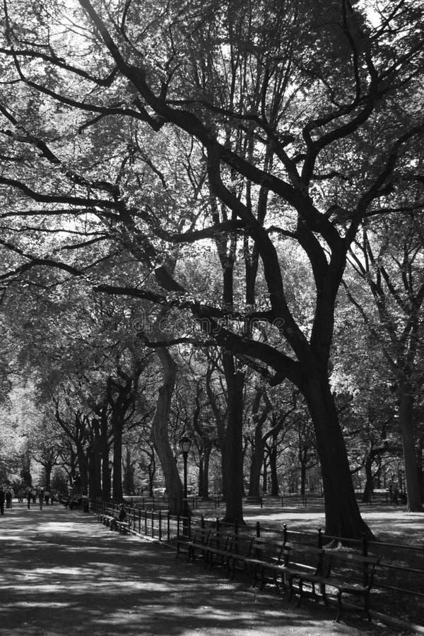 Alberi del Central Park fotografia stock libera da diritti