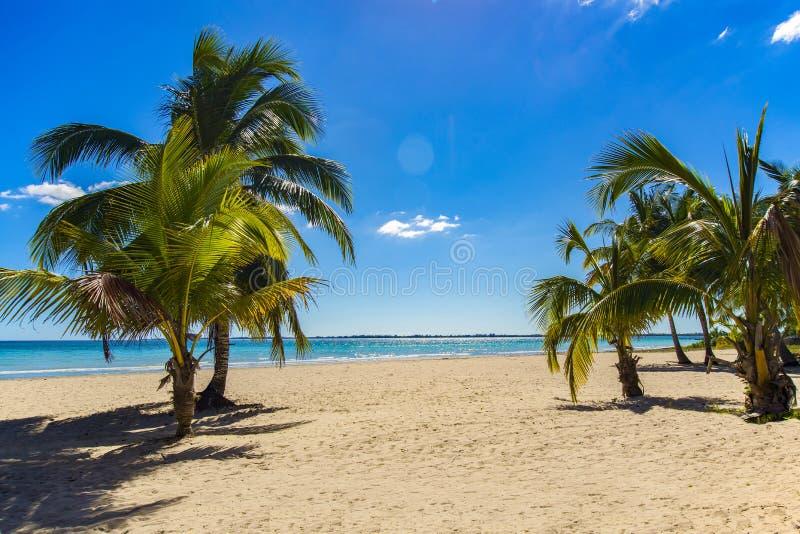 Alberi del cocco contro cielo blu e bello Carta da parati del fondo di feste di vacanza Vista della spiaggia tropicale piacevole fotografia stock libera da diritti