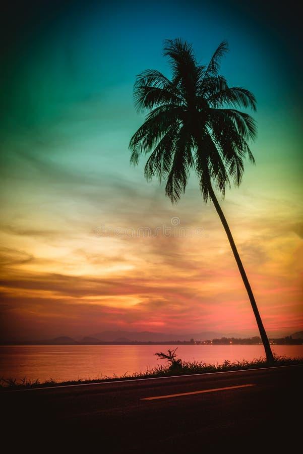 Alberi del cocco della siluetta sulla spiaggia al tramonto fotografia stock libera da diritti