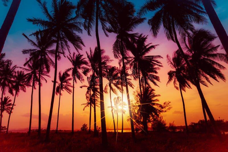 Alberi del cocco della siluetta sulla spiaggia al tramonto immagine stock