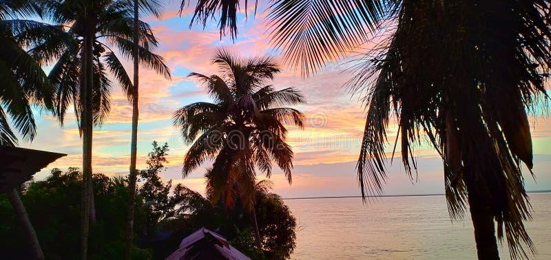 Alberi del cocco vicino alla massa di acqua immagini stock libere da diritti