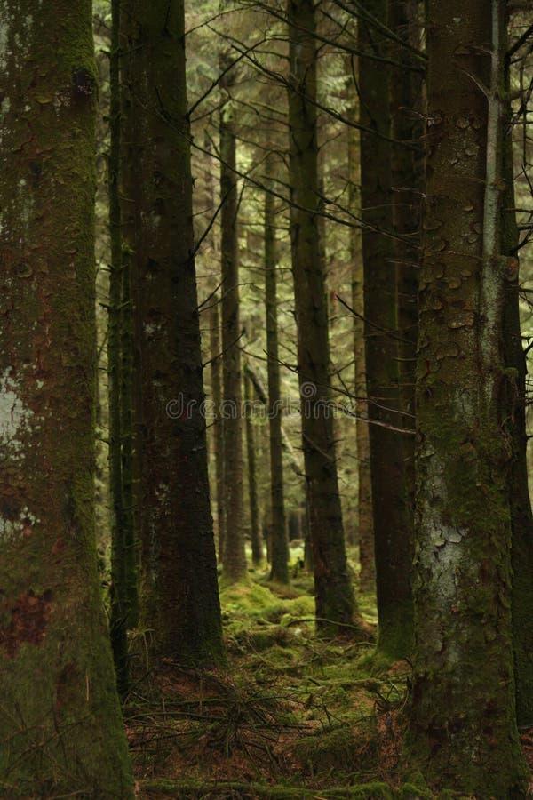 Download Alberi del corridoio fotografia stock. Immagine di dartmoor - 215994