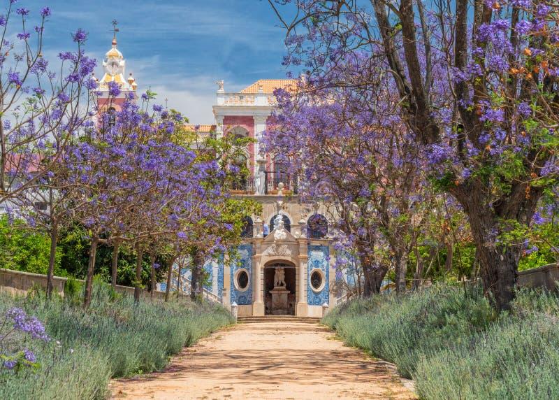 Alberi del Jacaranda nel giardino del palazzo di Estoi, Algarve, Portogallo fotografia stock