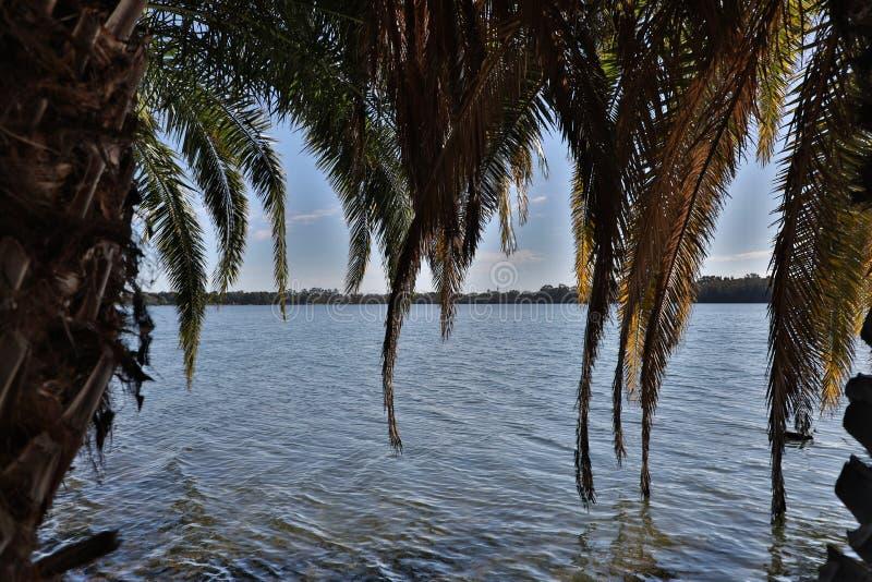 Alberi del lago Monger del lago immagini stock libere da diritti
