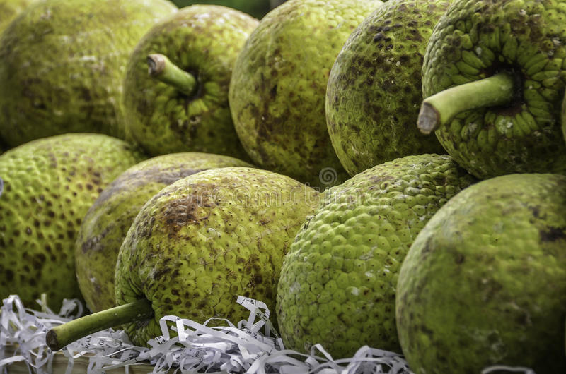 Alberi del pane giamaicani immagini stock libere da diritti