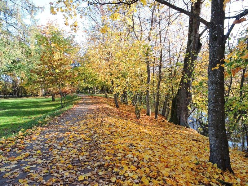 Alberi del percorso e di autunno di camminata, Lituania fotografia stock