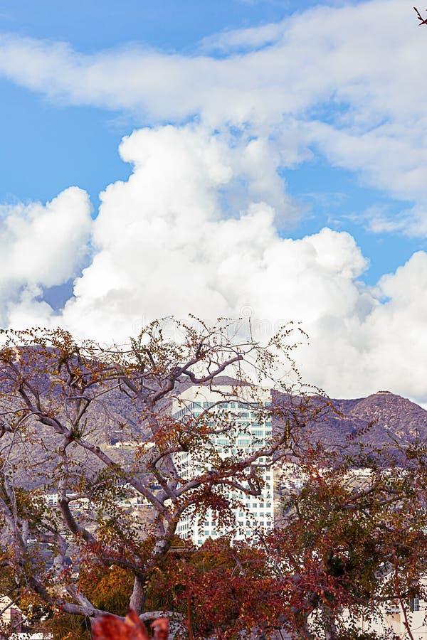 Alberi del sicomoro con il highrise, le montagne e le nuvole fotografia stock