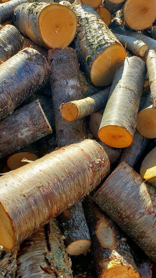Alberi del taglio della legna da ardere fotografia stock