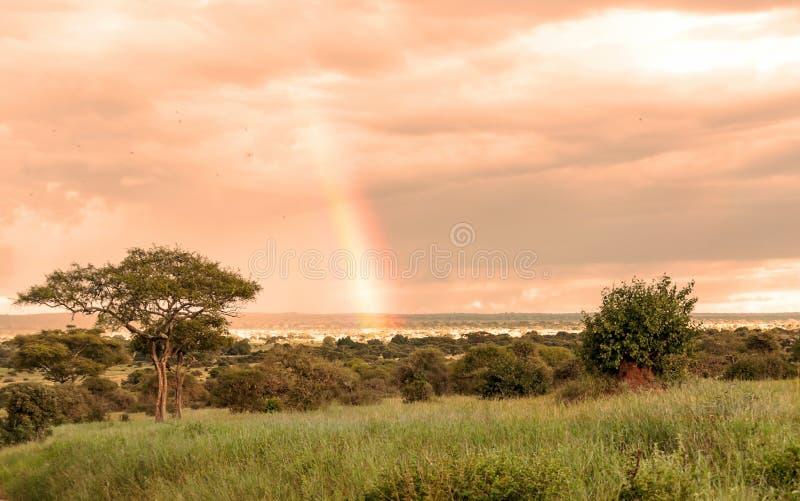 Alberi dell'acacia in Tanzania fotografie stock