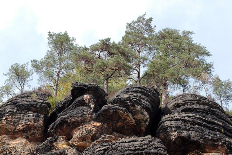 Alberi della conifera su una roccia nella riserva Hrensko, repubblica Ceca Vista scenica della scogliera con i pini sui precedent immagini stock