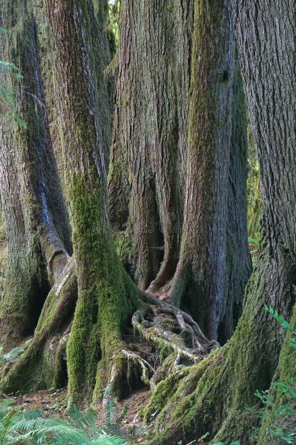 alberi della foresta pluviale fotografia stock immagine