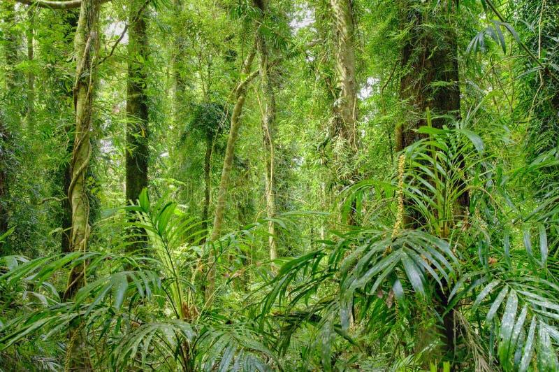 Alberi della foresta pluviale fotografia stock