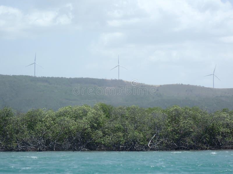 Alberi della mangrovia sulla riva immagine stock libera da diritti
