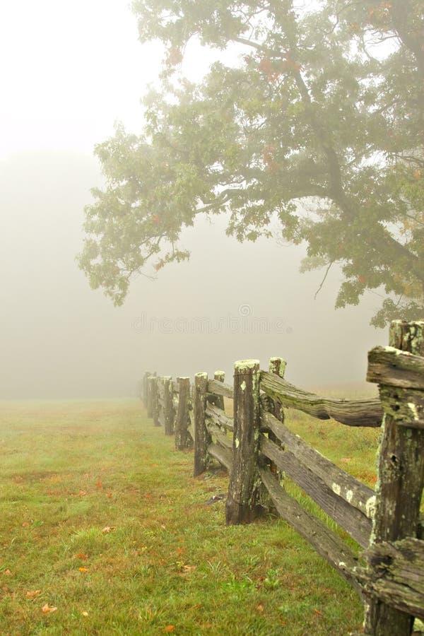 alberi della nebbia della rete fissa fotografia stock