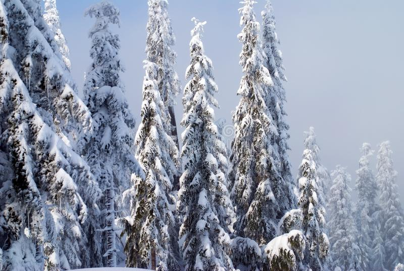 Alberi della neve fotografia stock libera da diritti