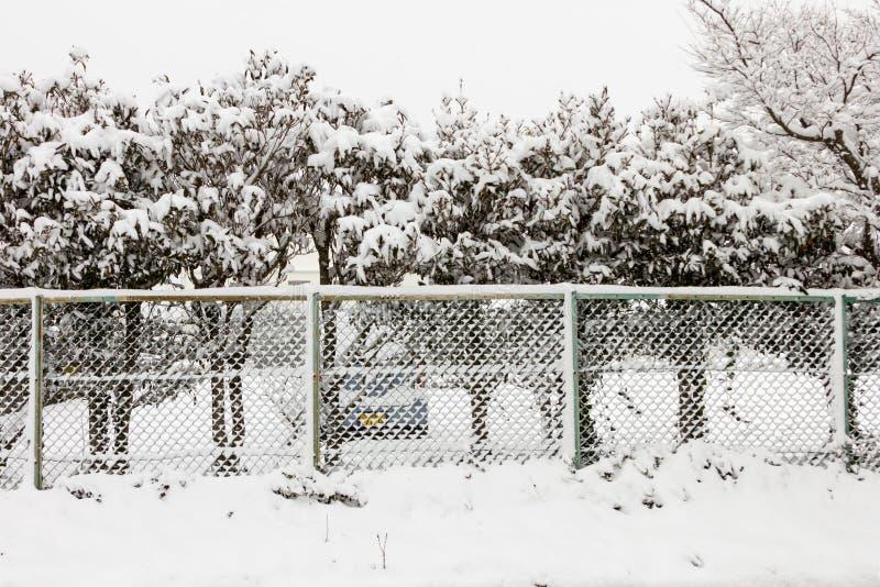 Alberi della neve dietro la parete immagine stock libera da diritti