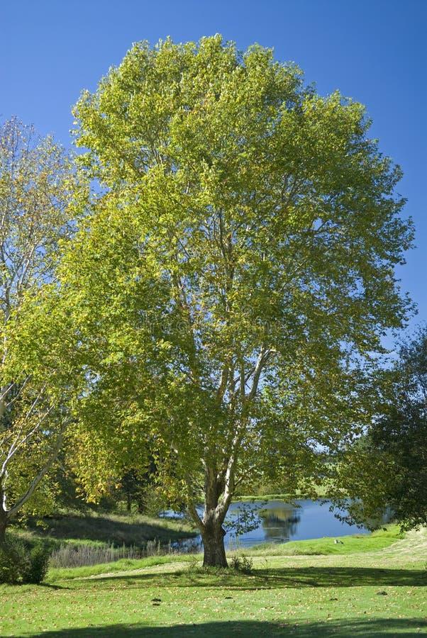 Alberi della riva del lago fotografia stock libera da diritti