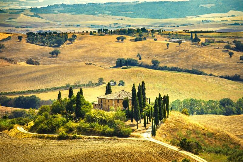 Alberi della Toscana, del terreno coltivabile e di cipresso, campi verdi. San Quirico Orcia, Italia. immagine stock libera da diritti