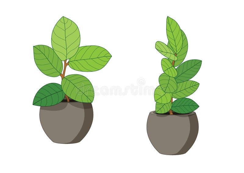 Alberi delle foglie verdi in vasi freschi royalty illustrazione gratis