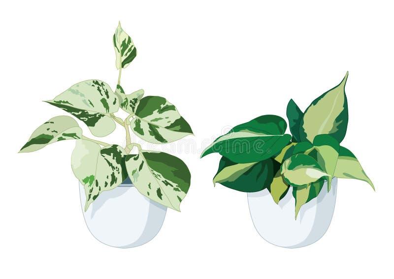 Alberi delle foglie verdi in vasi illustrazione vettoriale