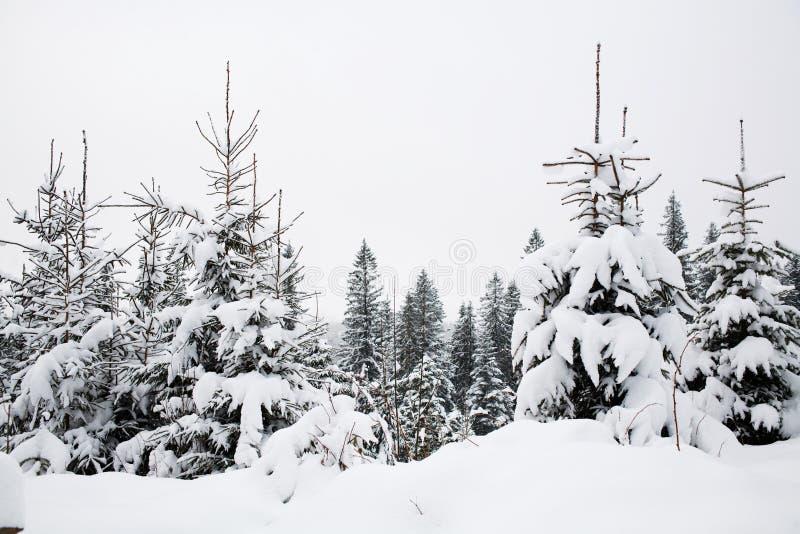 Alberi dello Snowy fotografie stock libere da diritti