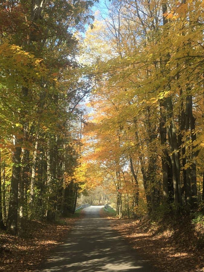 Alberi di acero di giorno dell'autunno fotografie stock