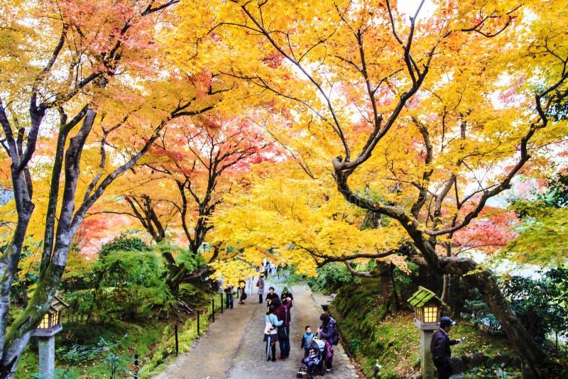 Alberi di acero rosso in un giardino giapponese fotografia for Acero rosso giapponese