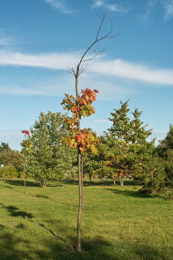Download Alberi di autunno fotografia stock. Immagine di verde - 21623116