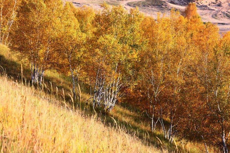 Alberi di autunno al sole fotografia stock libera da diritti